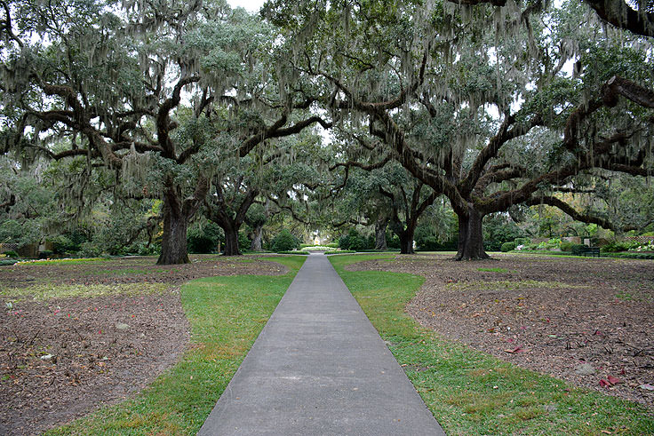 Live oaks at Brookgreen Gardens in Murrell's Inlet, SC